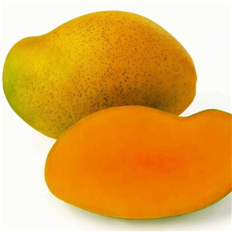 Essay My Favorite Fruit Mango